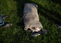 В Звениговском районе сотрудники полиции пресекли факт незаконного вылова рыбы в период нереста